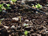 Soil health close up