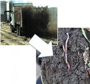 manure application adds to soil health