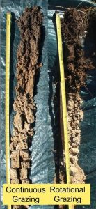 photo of soil cores from land under different grazing practices