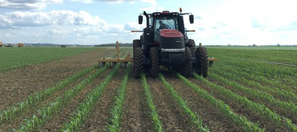 Manure being applied in the corn field, using a drag-hose system.