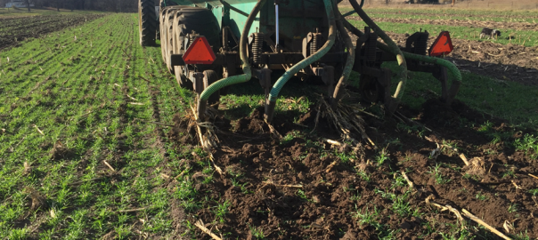 Fall manure injection into cereal rye cover crop.