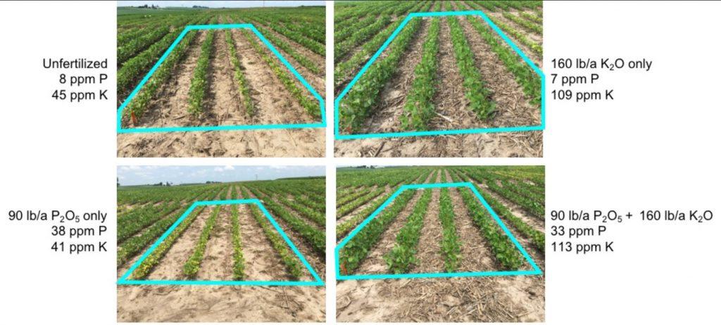 soybean plots