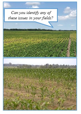 Crops with nutrient deficiencies